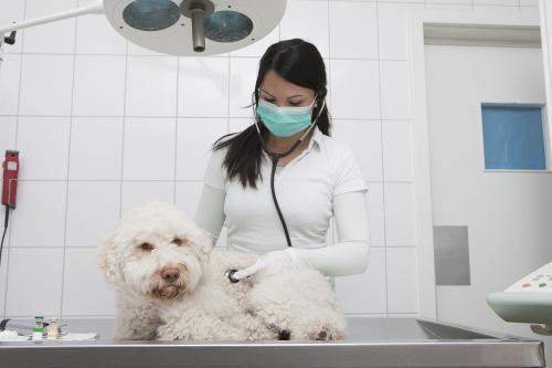 宠物医学专业