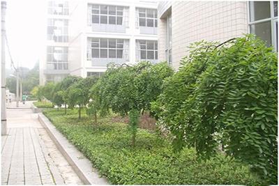 贵阳中医学院时珍学院-校园一角