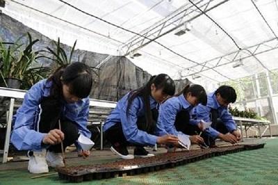 中草药栽培与鉴定专业